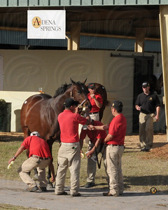 Image 4423V OBS 2009 January Mixed Sale   Adena Springs