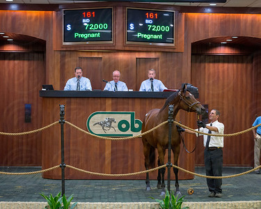 OBS Fall Mixed Sale, 2013, Hip 161 	09 	M 	Ribbon Taffy 	Hard Spun 	Partyship 	Into Mischief 	Top Line Sales LLC, Agent II 	Hunter Valley Farm 	72,000