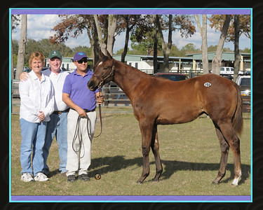 "Image 4480 Breeders &  Hip 155 top horse Tuesday Preferred OBS 2009 January Mixed Sale 155 ""Noble Exchange"" GR/RO C '08 Exchange Rate-Social Scene, JANIE ROPER, AGENT IV Kim and Eddie James"