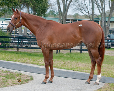 OBSMarch  2YO 2010 Sale ; for $525,000