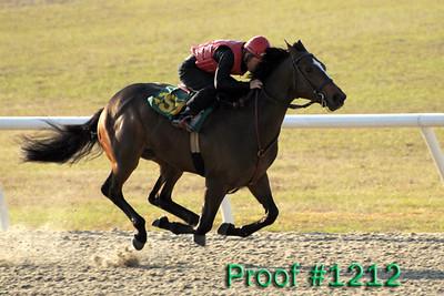 Hip 259 Forest Danger - Lady H 2007 colt Image 1212