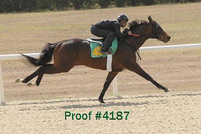 Hip 401 Tiznow- Reverence 2007 colt  Image 4187