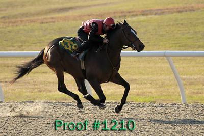 Hip 259 Forest Danger - Lady H 2007 colt Image 1210