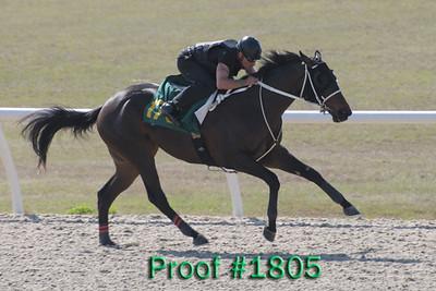 Hip 175  Officer - Format 2007 colt Image 1805