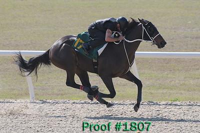 Hip 175  Officer - Format 2007 colt Image 1807