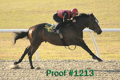 Hip 259 Forest Danger - Lady H 2007 colt Image 1213