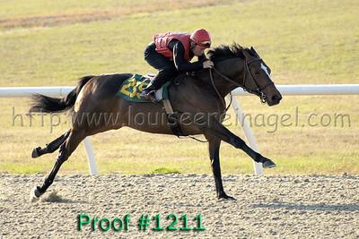 Hip 259 Forest Danger - Lady H 2007 colt Image 1211