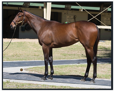 OBS April 18 Kathie Maybee 637obsapr18_Into Mischief - Marnier 16f owned by Jeffrey Bloom, Consigned Paul Sharp