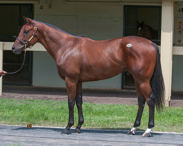 obS June 2yos Hip 566 Flatter- Catch My Eye 15c deMeric Sales, Steve Young Agent