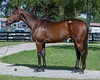 Obsj13 Wed, Sale, 371 Casse at eddie Woods, Indian Charlie colt, Dogwood Smart Strike colt AM conformation