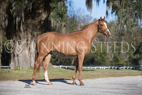 Drosselmeyer x Chip Filly