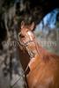 StunningSteedsPhoto-0100