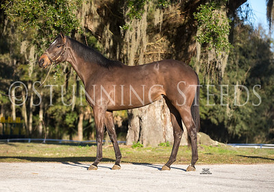 Tiznow x Point Empress Filly