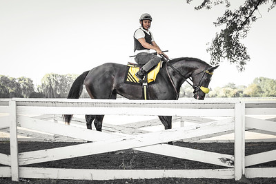 Speed Devil on the horse path at Arlington Park, 2017