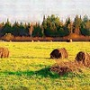 A painting of the hay field by Dee Maples