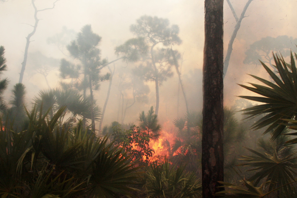 Heavy palm fuels cause moments of flare-up