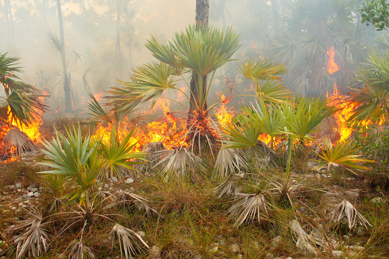 Slow, light ground fires offer plenty of opportunity for wildlife to escape