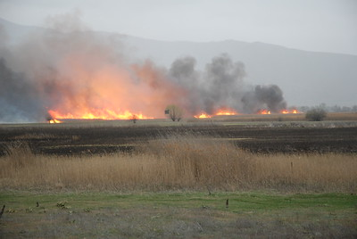 Fires March 2008