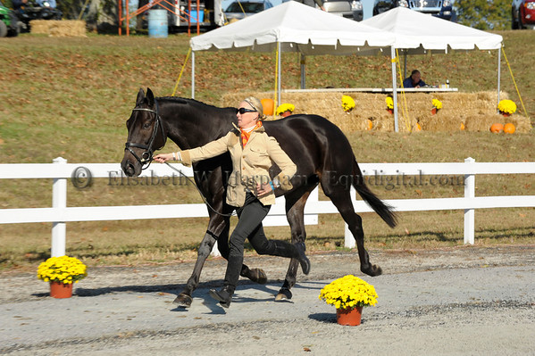 0502 - 2010 Fair Hill Three Day Event - 66 - Susan Beebee - Prowler - 06