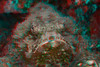 3d image of devil scorpionfish, Scorpaenopsis diabolus, nohu 'omakaha (H) Hawaii ( Central Pacific Ocean )
