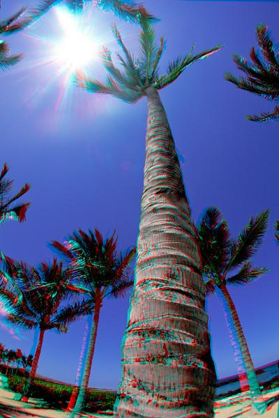 3D image of Palm tree, Kukio, Big Island, Hawaii ( Central Pacific Ocean )