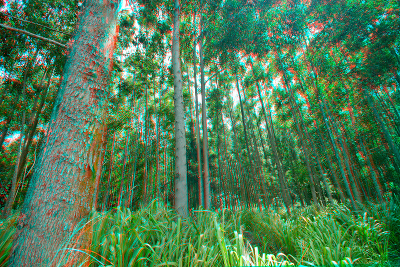 3D image of forest. Hawaii.