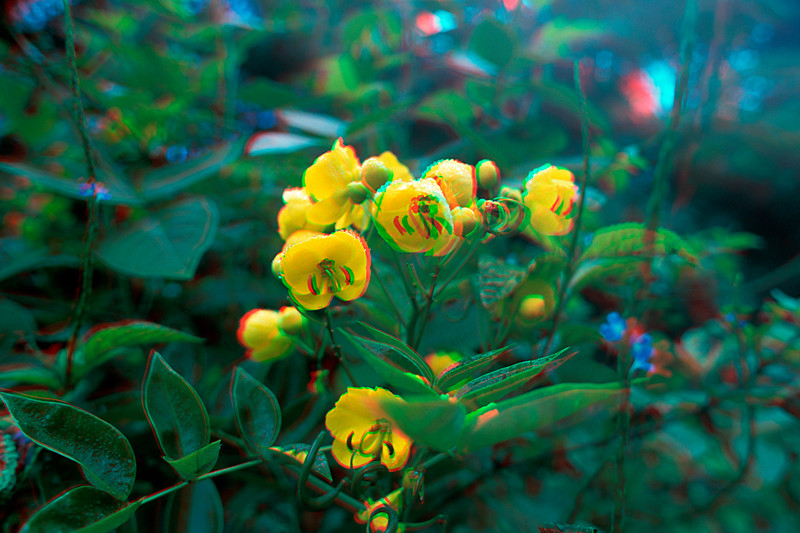 Wildflowers in 3D, Hawaii