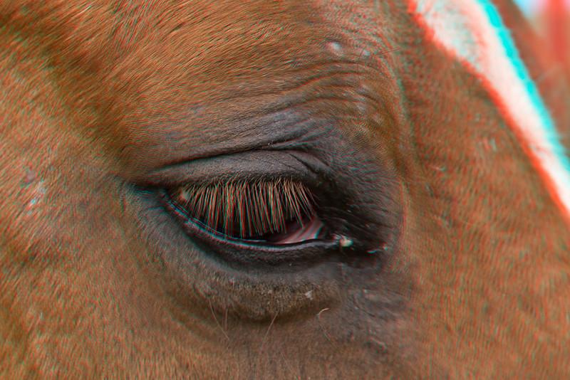 3D image of horses eye, Waimea, Hawaii