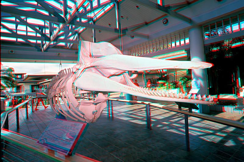 Sperm whale skeleton in 3D, Hawaii