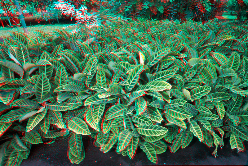 3D image of foliage.
