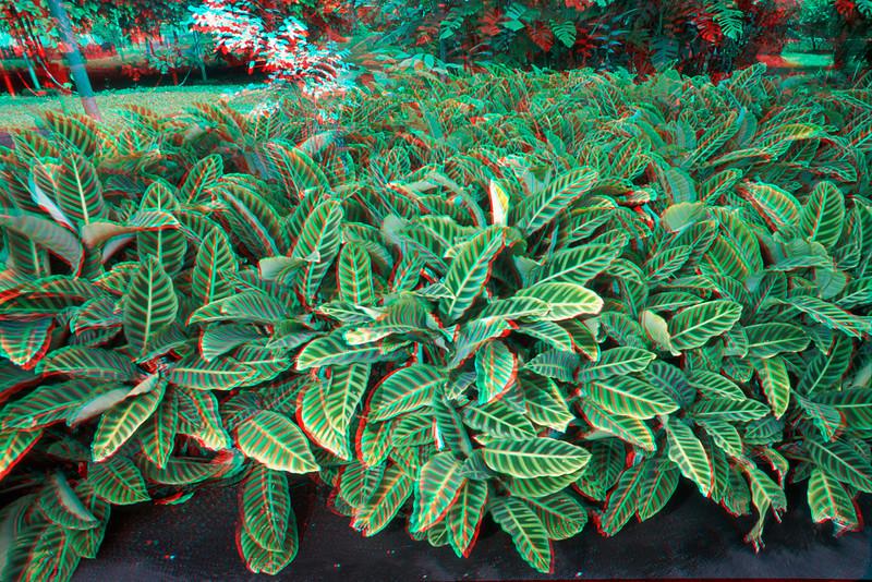 3D image of foliage.