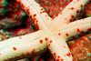 3D image of linckia sea star