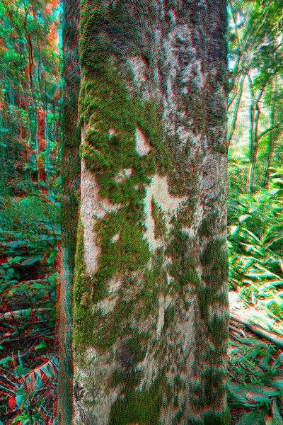 3D image of moss on a tree
