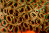 3D image of zoanthids, Hawaii (Central Pacific Ocean)