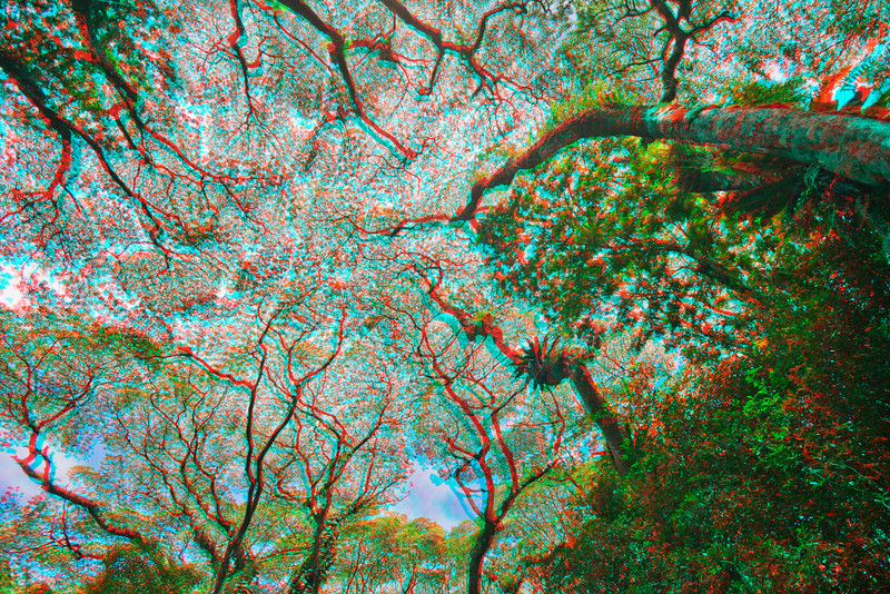 3D image of canopy in Puna