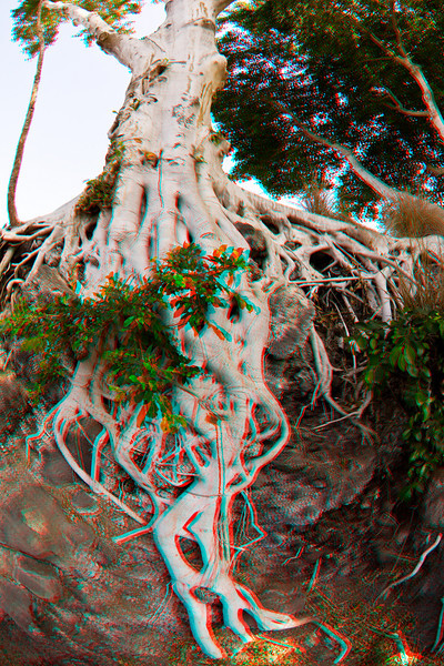 3D image of tree near golf course at Mauna Kea Resort, Hawaii