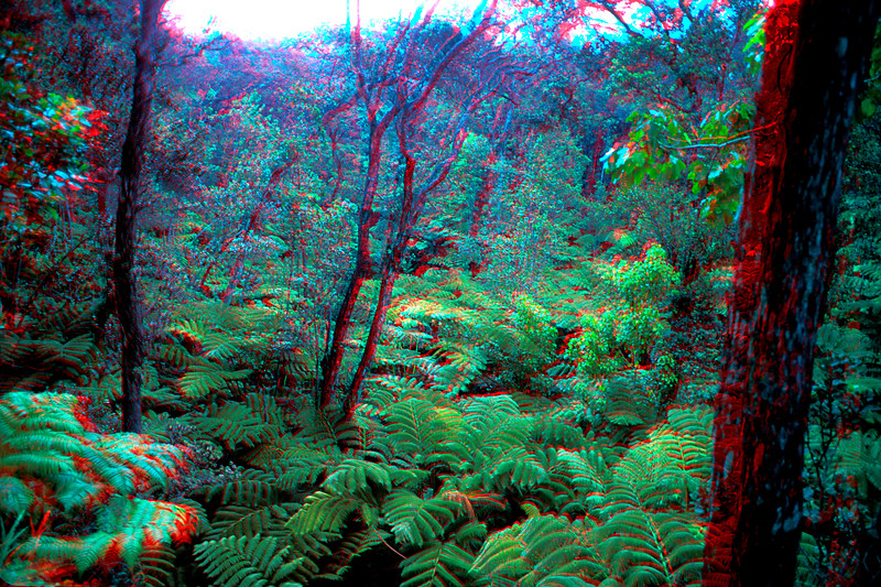Rainforest in 3D, Hawaii
