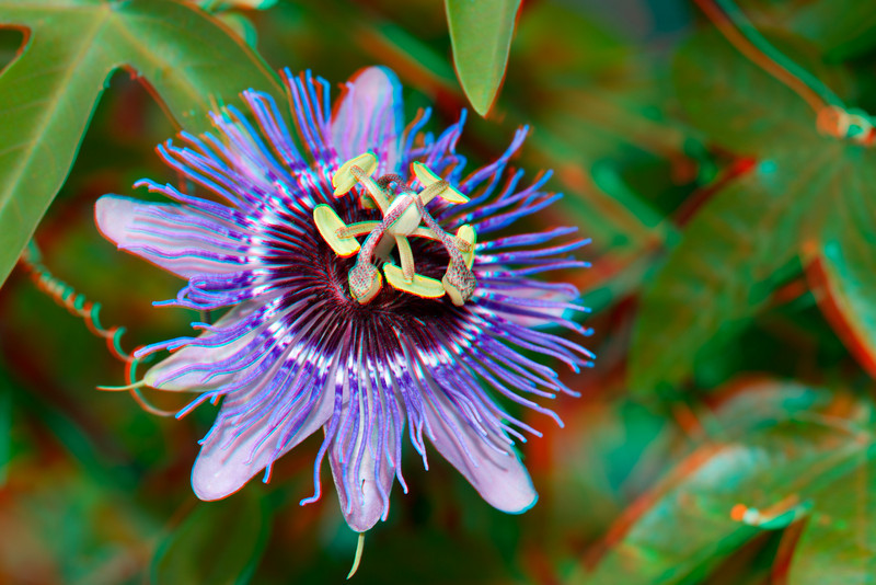 3D image of passion flower