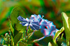 3D image of flowers, Kawaihae, Hawaii
