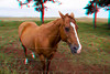 3D image of horse, Waimea, Hawaii