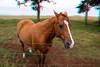 3D image of horse, Waimea, Hawaii