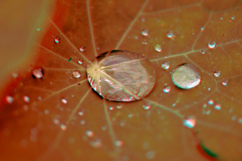 3D image of water droplets on nastutium leaf.
