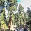 Three Rivers and Sequoia with Mom, Walter, Michael & Perry
