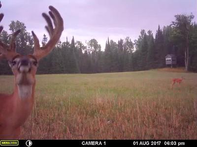 Aug Trail Cam Videos