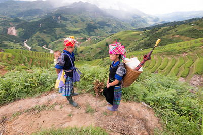 Hmong on rice terraces