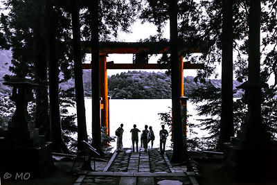 Fascinating Torii