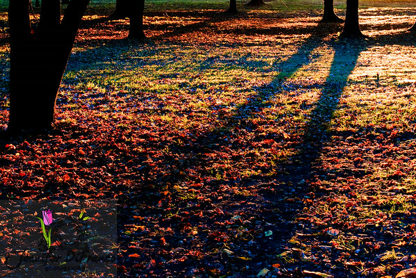 "November 11, 2008<br /> <br /> One more from our walk with the dogs. I loved the shadows and colors of this one.<br /> <br /> Thanks for all of your well wishes for Lily.  At one point yesterday she was not putting any weight on her back left leg, so we took her into the vet. Turns out she has arthritis.  Poor baby.  So she was given some pain meds to take as needed and we were told to go to the pet store and get some pills for joint and hip health.  She has to take 2 of those in the morning and 1 at night for 6 weeks then she can go down to a maintenance schedule of just taking 1 or 2 a day.  I feel so bad for my little buddy.  Dealing with constant pain is not fun but at least it isn't something life threatening.  This we can manage. The hubster decided he would be funny by saying, ""Yup she is your dog Jen, you are both getting old and crickety.""  He THINKS he is funny."