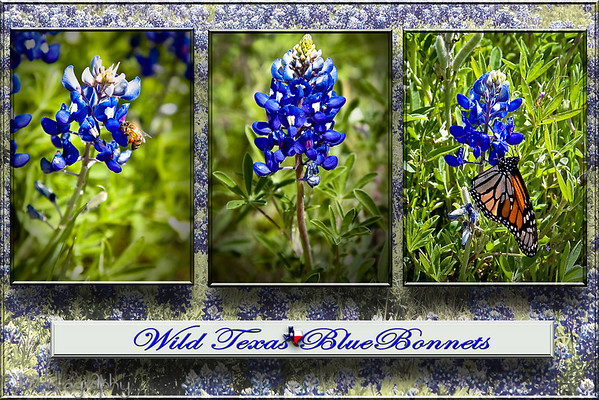 April 9, 2009  -Texas State Flower