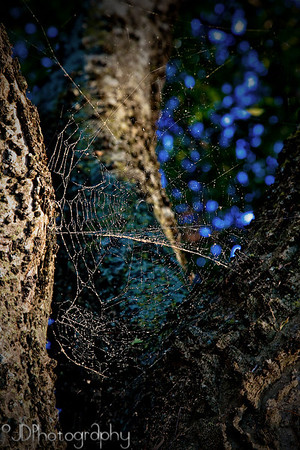 August 12, 2009 - dirty spider web - best viewed large