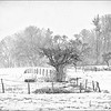 Old Fruit Tree Alone in the Snow